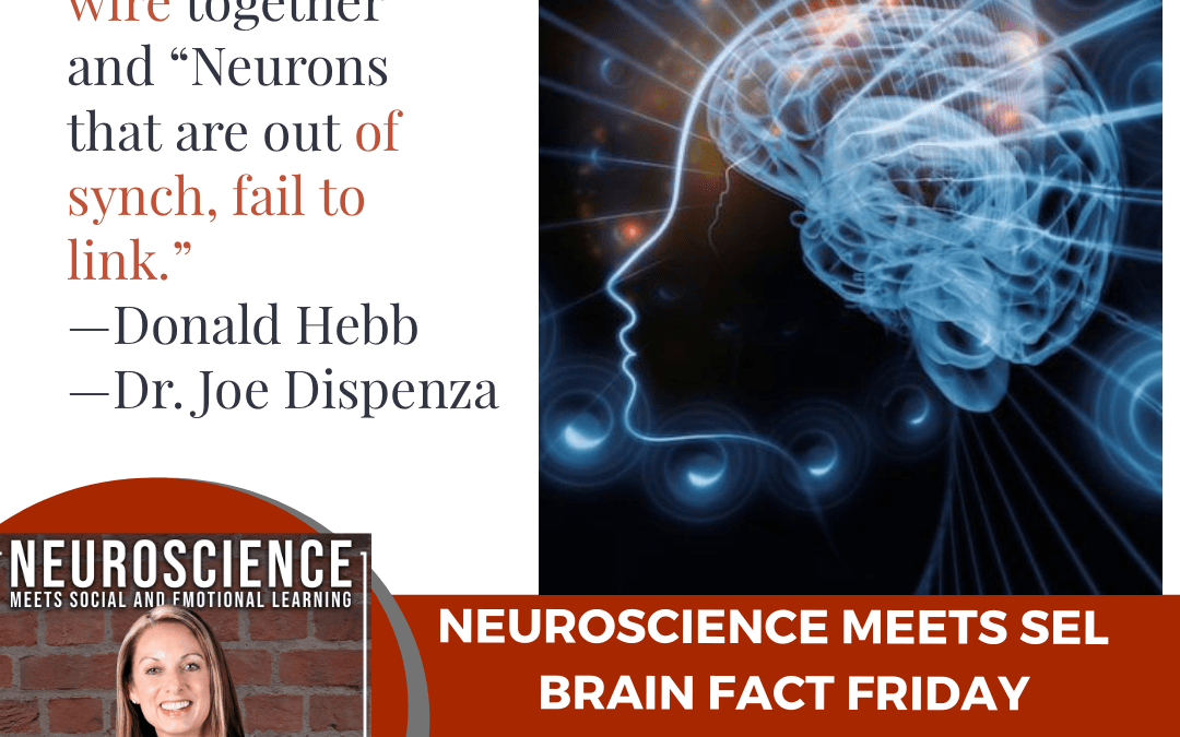 """Brain Fact Friday """"Applying Neuroplasticity to Your School or Workplace"""""""