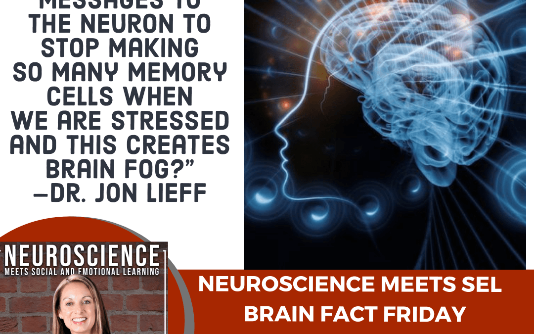 """Brain Fact Friday on """"Improving Mental Clarity by Understanding our Brain States, Brain Fog, and How It's Created"""""""
